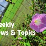 2019/08/19(月)-08/25(日) ジェフユナイテッド市原・千葉 Weekly News & Topics